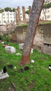 Los gatos del yacimiento de Torre Argentina.