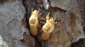 Villa Glori - exoesqueletos de insectos.